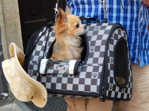 Where can I buy a handbag like that?