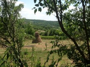 A rural vista
