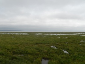 salt marshes in the waters of Kents Bank and Grange-over-Sands