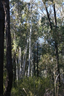 Whitegum Lookout Walk Warrumbungle Ranges (30)