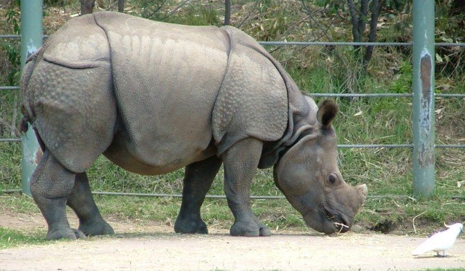 Dubbo Zoo 25Nov2010 (60)