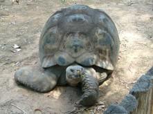 Dubbo Zoo 25Nov2010 (92)