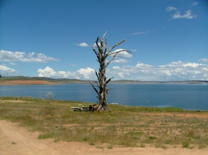 Still at Adaminaby, looking over Lake Eucumbene.  The tree stump survived drowning?