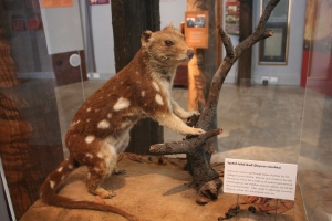 Pilliga Forest Discovery Centre (4)