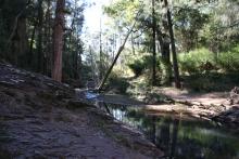 Wambelong Nature Trail, Warrumbungle Ranges (10)