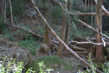 Wambelong Nature Trail, Warrumbungle Ranges (17)