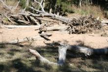 Wambelong Nature Trail, Warrumbungle Ranges (2)