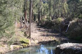Wambelong Nature Trail, Warrumbungle Ranges (23)