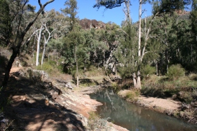 Wambelong Nature Trail, Warrumbungle Ranges (24)