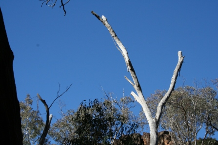 Wambelong Nature Trail, Warrumbungle Ranges (8)