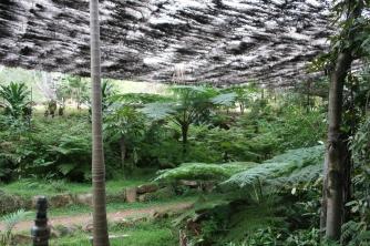 Wellington Arboretum_Fern Gully_Emu (10)