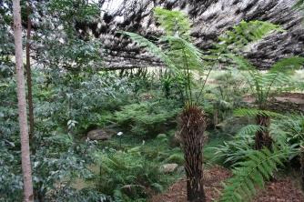Wellington Arboretum_Fern Gully_Emu (9)