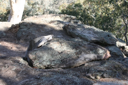 Whitegum Lookout Walk Warrumbungle Ranges (40)