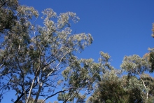 Whitegum Lookout Walk Warrumbungle Ranges (43)