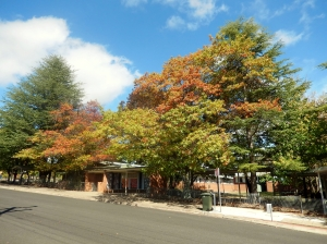 Autumn Colours Armidale March 2014
