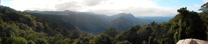 Dorrigo Rainforest Overhead Panorama