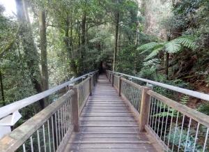Into the Great Unknown Entrance to Dorrigo Rainforest Walk