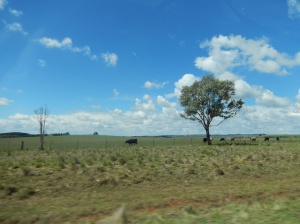On the road from Armidale to Walcha