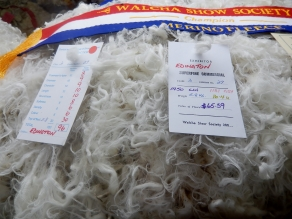 Wool Competition Walcha Agricultural Show