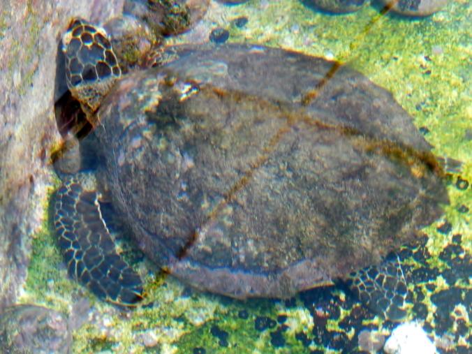 Ardyaloon Trochus Hatchery & Aquaculture Centre, One Arm Point, WA 2016-05-27 (38)