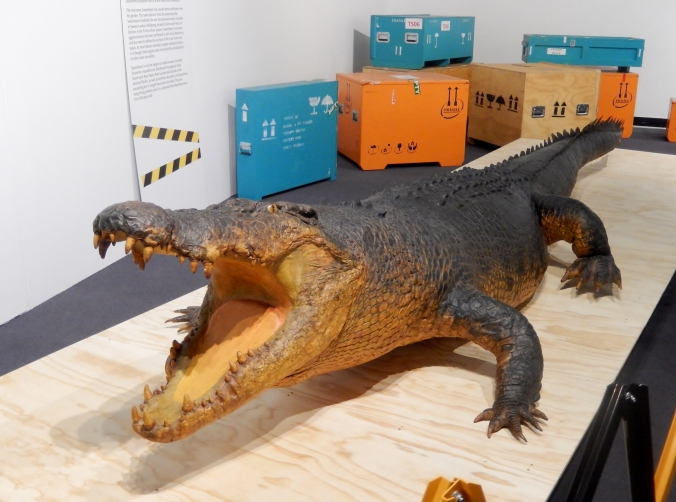 """Sweetheart is a male estuarine (saltwater) crocodile length 5.1 m (16' 10"""") , girth 2.3 m, weight 780 kg (1720 lb). Estimated age is 50 - 70 years."""