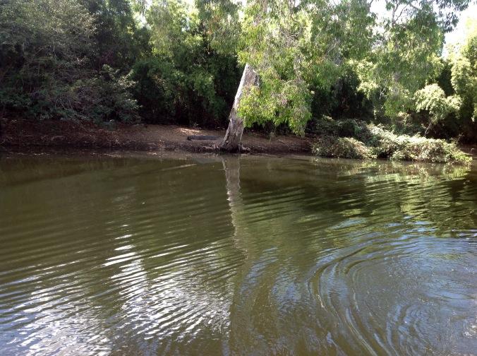 Crocodile on the bank at Yellow Water Billabong Cruise Kakadu 2016-05-30 (1)
