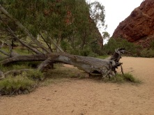 Simpsons Gap near Alice Springs NT June 2016