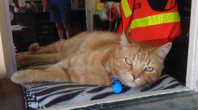 birney-the-bendigo-tram-cat-1024x570