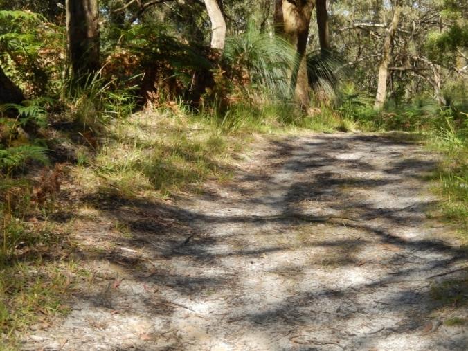 baldrys-crossing-circuit-walk-mornington-peninsula-national-park-2016-12-12-3-1024x768-800x600