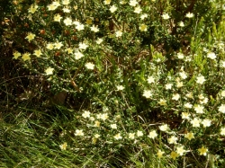 wildflowers-on-the-mt-beauty-to-omeo-road-2016-12-15-4-1024x768-800x600