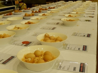 RAS Egg Competition (640x479)