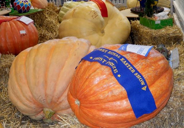RAS Pumpkin Competition (3) (640x445)