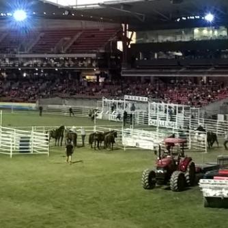 RAS Rodeo (10) (640x348)