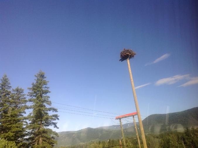 Osprey Nest in Telegraph Pole (800x598)