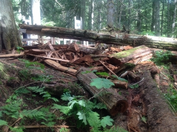Giant Cedars Boardwalk (2) (800x598)