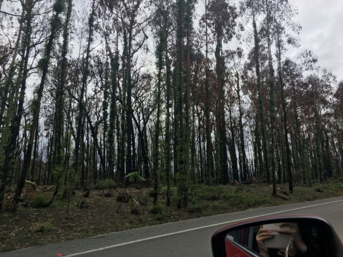 Burnt forest on the way to Eden