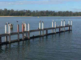 Lakes Entrance Marina Views cormorants 2