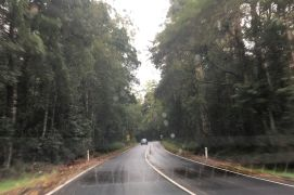 rs 2 Otway Forest
