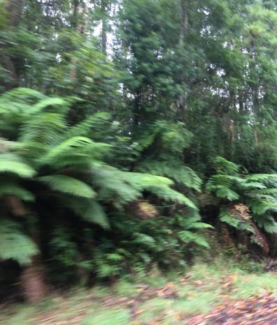 rs 3 Otway Forest