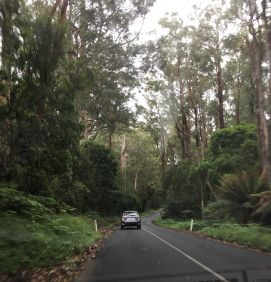 rs Otway Forest
