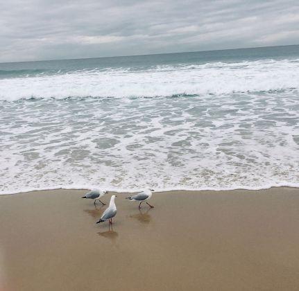 seagulls (4)rs