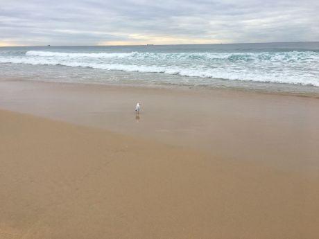 seagulls (6)rs
